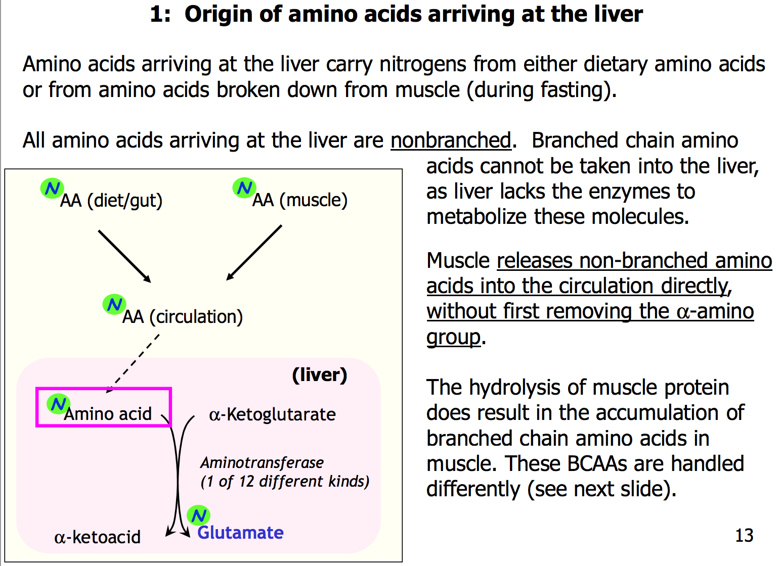branched amino acids when to take