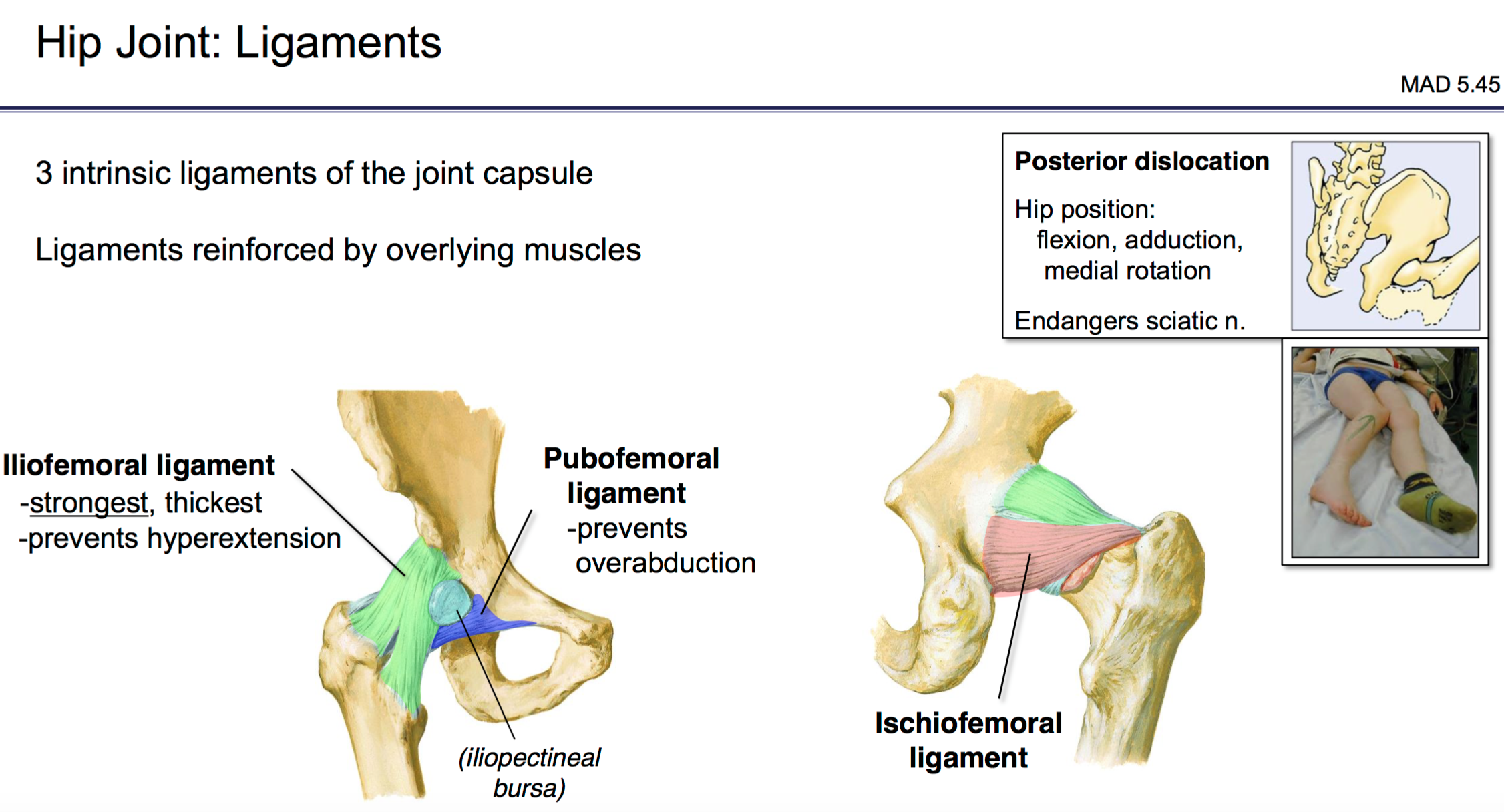 Fg Anatomy G49 Joints Of The Lower Extremity Anatomy Unit 6