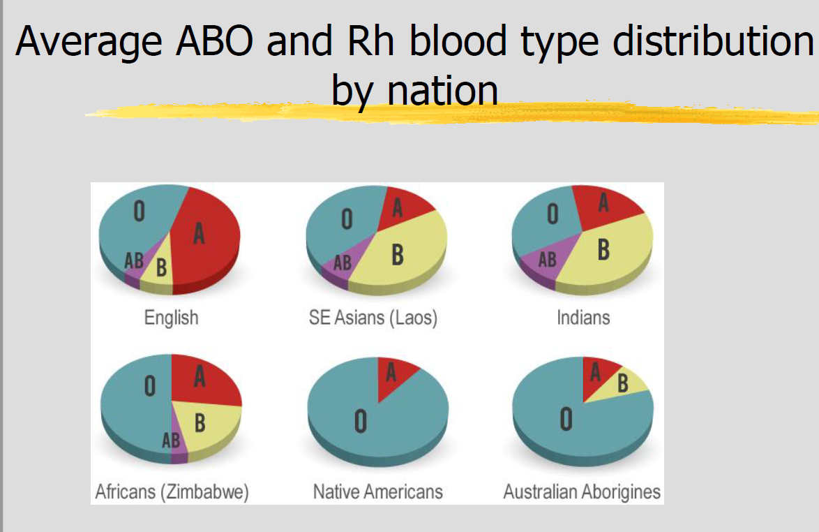 Bl2 blood types flashcards memorang which blood type is the most normal in the world where is it the highest and what is the lowest pooptronica