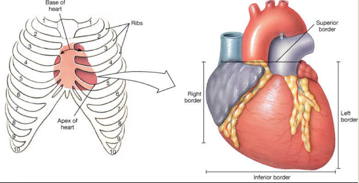Cardiology Anatomy Week 2- Heart Structures (Internal/External ...