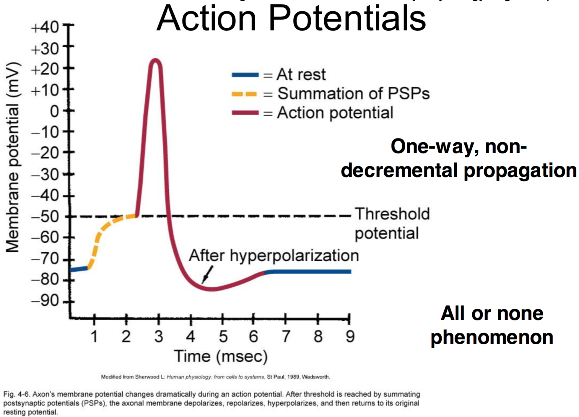 Ccf physiology l6 8 graded and action potentials physiology unit 1 action potential graph ccuart Image collections