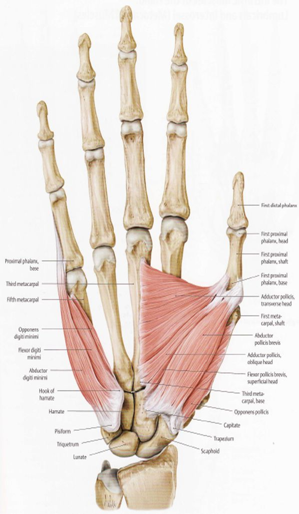 Wrist and Elbow (OMM ) Flashcards | Memorang