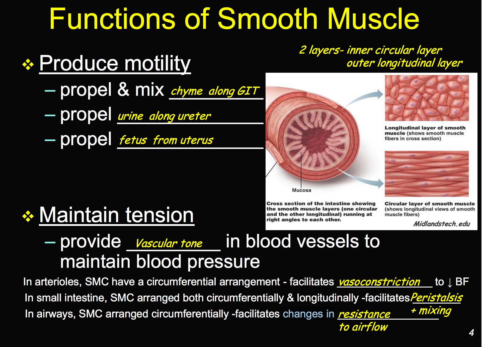 CCF Physiology L14 (Smooth Muscle) Flashcards | Memorang