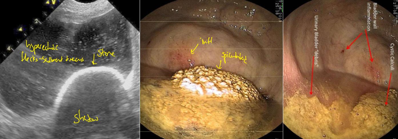 FA16 Equine Medicine & Surgery E7-GU (Cvm, urinary