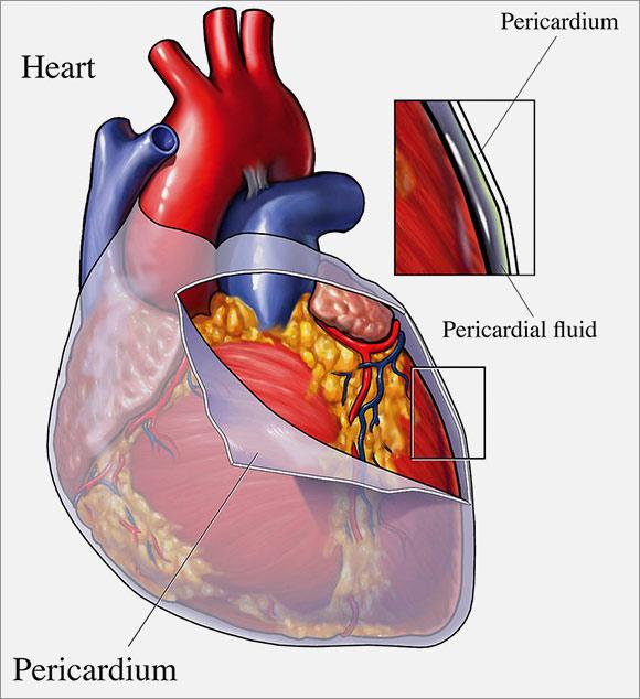 Cardiovascular anatomy physiology npte cardiopulmonary system epicardium ccuart Choice Image