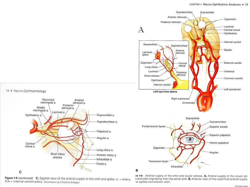 4.01 - Vision: Anatomy & Physiology (Neuro | Ophthalmology | Alan ...