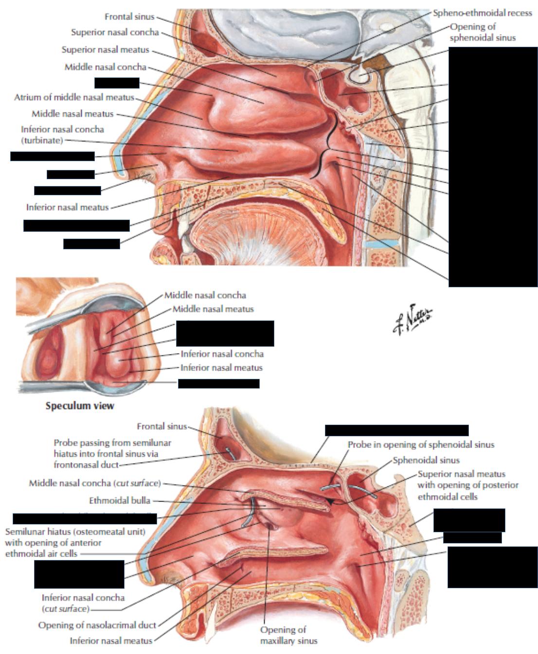 Nasolacrimal Duct Anatomy Gallery - human body anatomy