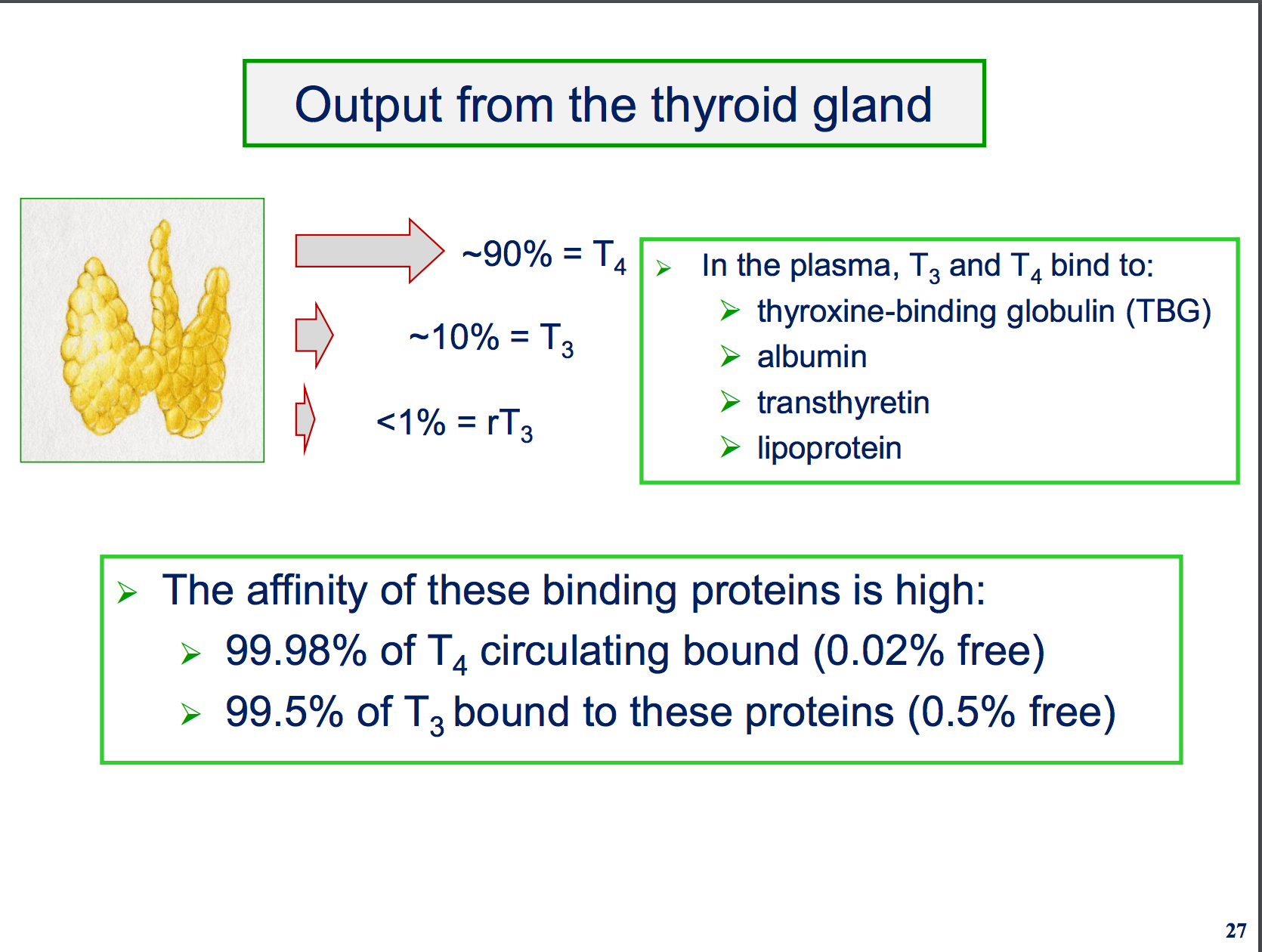 Physiology L29 30 Thyroid Gland Flashcards Memorang
