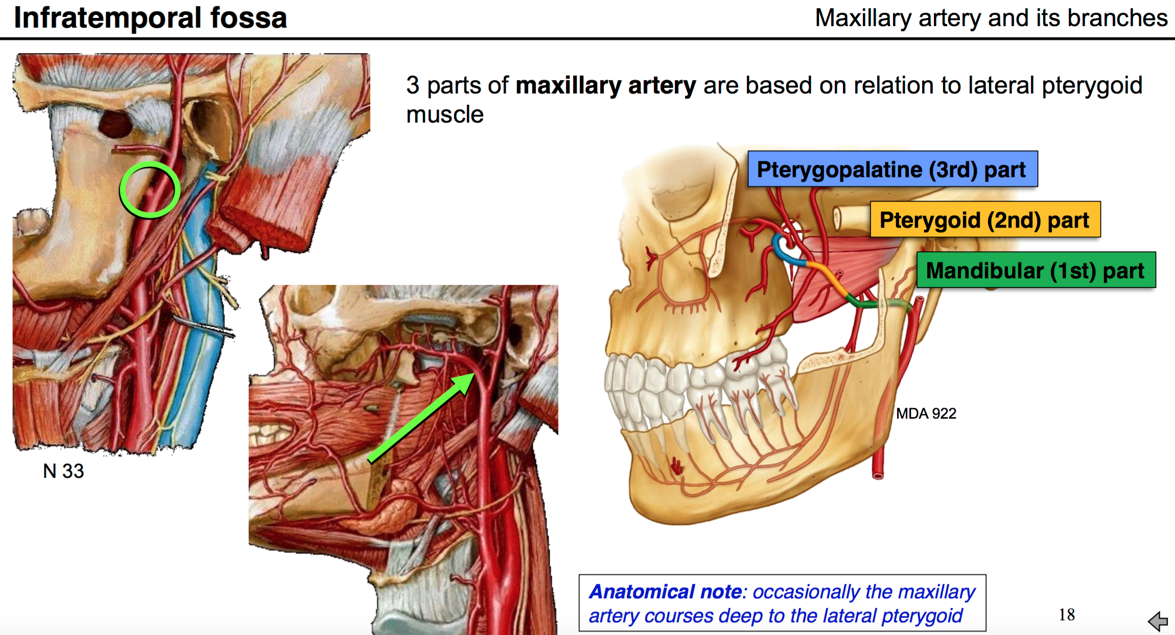 30 Anatomy G60 Temporal Fossa And Infratemporal Fossa Flashcards