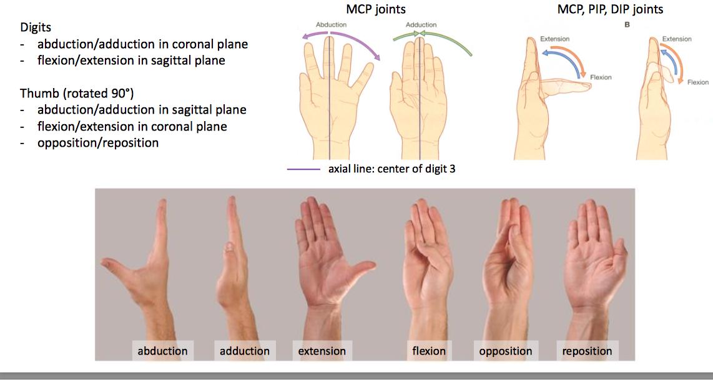 Hand Movements Anatomy Images - human body anatomy