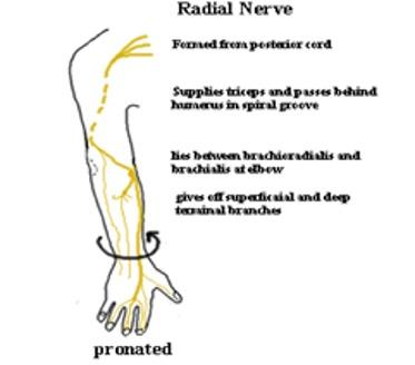radial nerve palsy treatment pdf