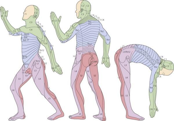 neck pain and paralysis following trauma nbme surgery shelf exam