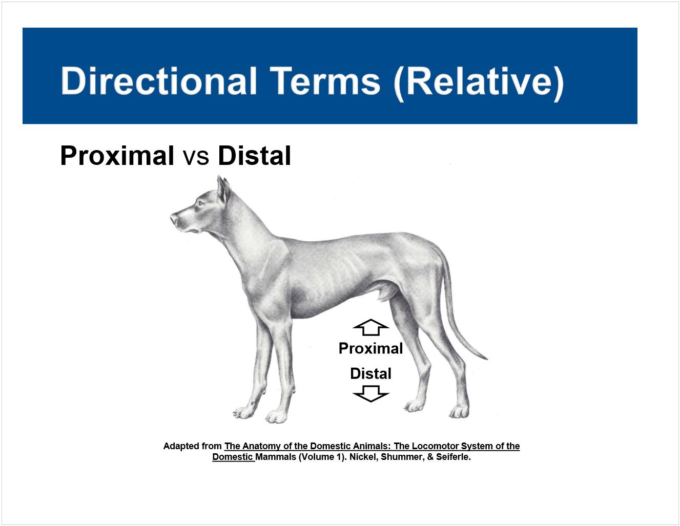 Anatomy Lecture #1 (Terminology) (Anatomy) Flashcards | Memorang