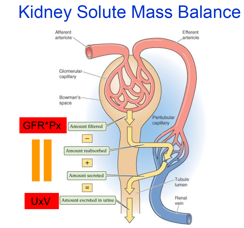 Logic of Kidney 10/2 (Renal) Flashcards | Memorang