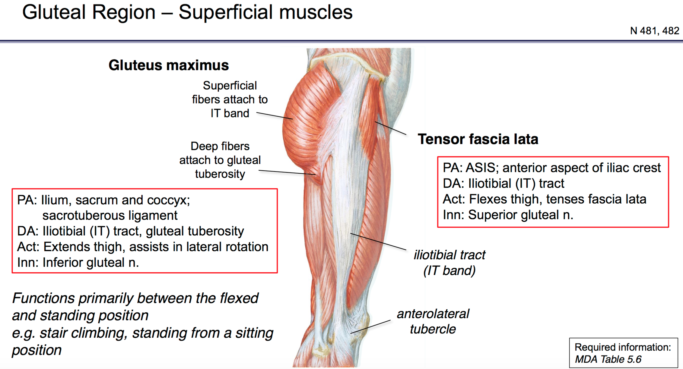 Perfect It Band Anatomy At Knee Crest Human Anatomy Images