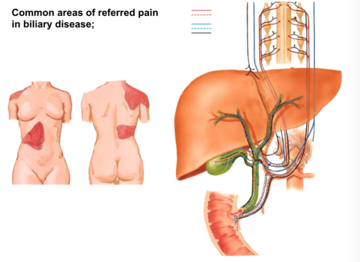 Clinical Correlations of Lesser Sac (Lecture #4) (Gross