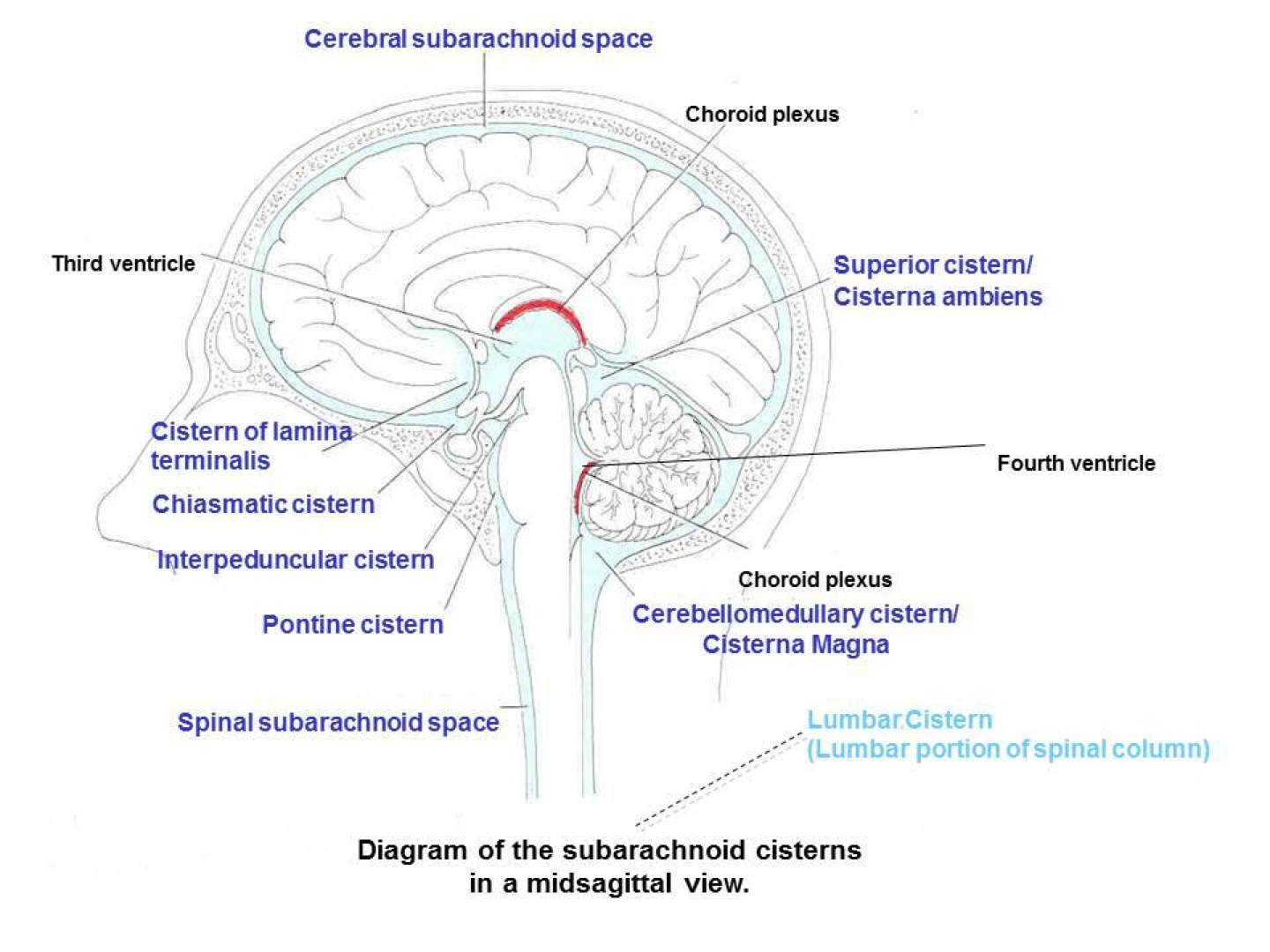 csf flow through expanded parts of sas called cisterns  (cerebellomedullary (magna), pontine