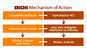 Hydralazine Nitrate Isdn Hydral Flashcards Memorang