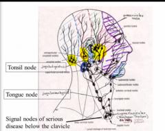Organization Of Neck (Dr  Carsia) Flashcards   Memorang