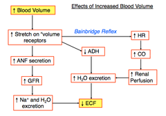 Physiology quizlet cardio flashcards memorang what happens when blood volume increases use bainbridge reflex anf ccuart Choice Image