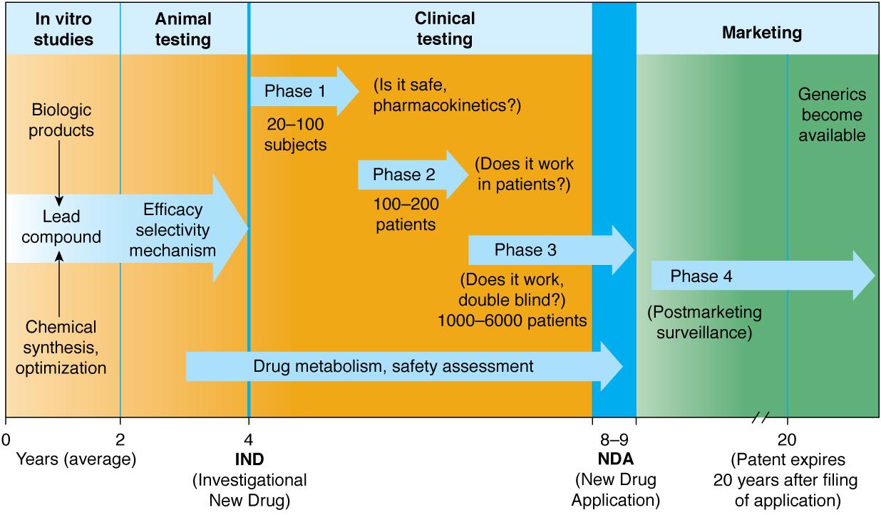 Drug Approval Process (Pharmacology) Flashcards | Memorang