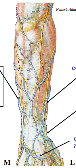 B4W3 Anatomy (Elbow, Wrist, Hand) Flashcards | Memorang