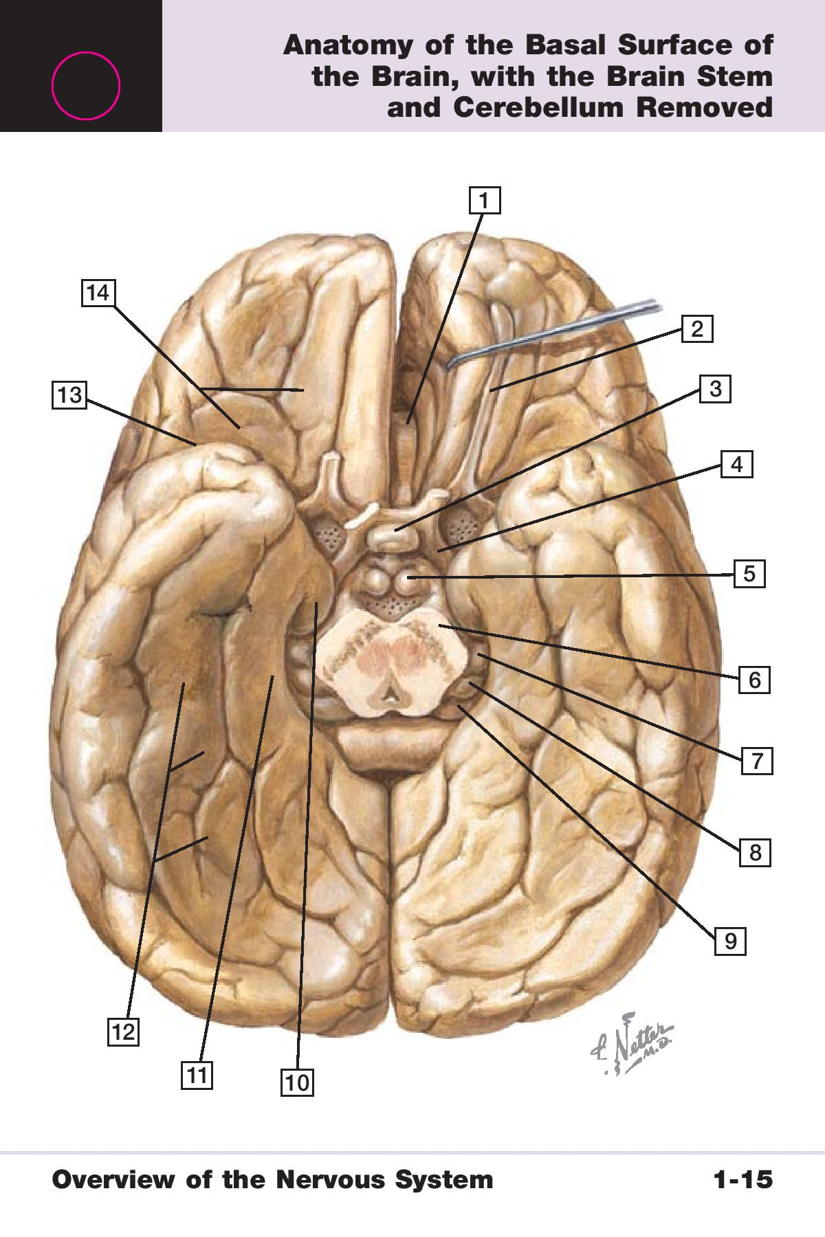 Neuroscience 1 (Neuro) Flashcards | Memorang