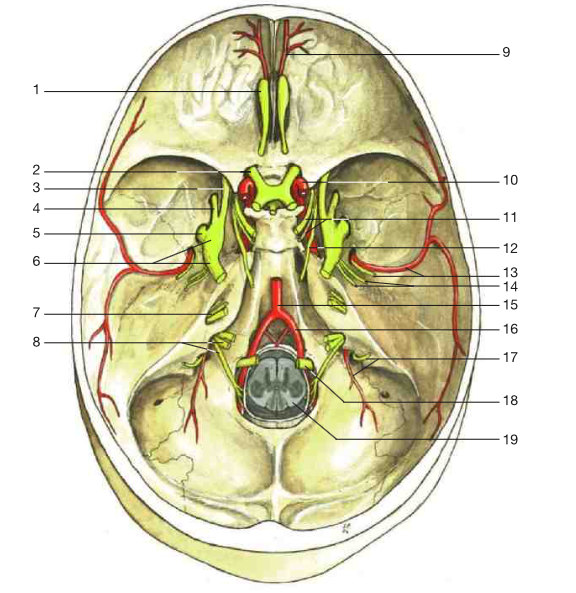 L6 L7 Cranial Nerves Spinal Nerves Sympathetic Trunk Head And
