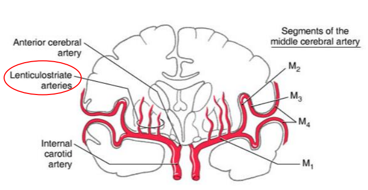 Gross Brain Topography 2blood Supplyventricular Systemcsf Cns