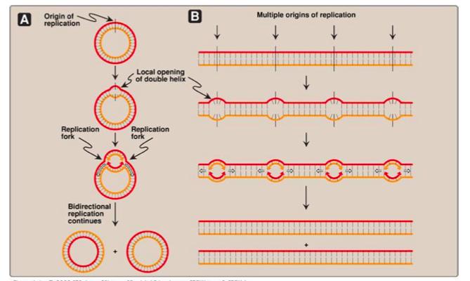 Dna Replication Cmb Pre Study Flashcards Memorang
