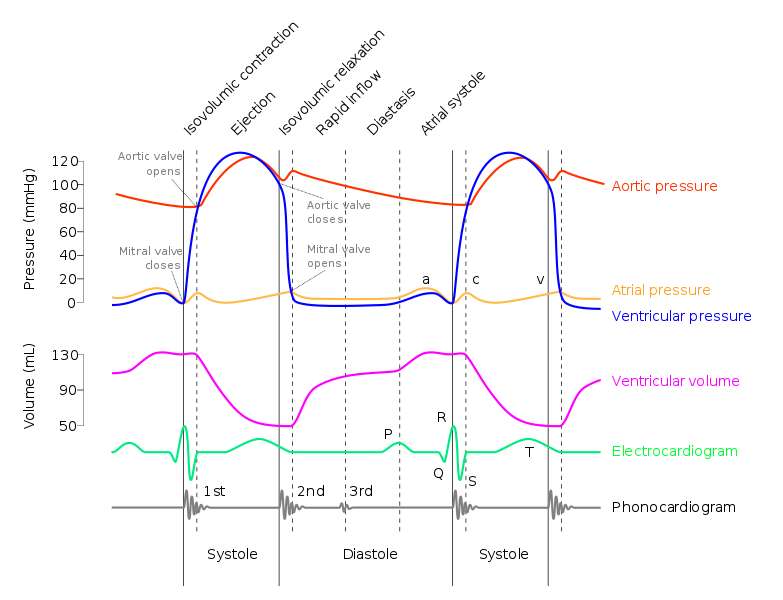 Wiggers diagram cardiac cycle and jugular venous pulse flashcards ventricular systole ejection 1 ccuart Image collections