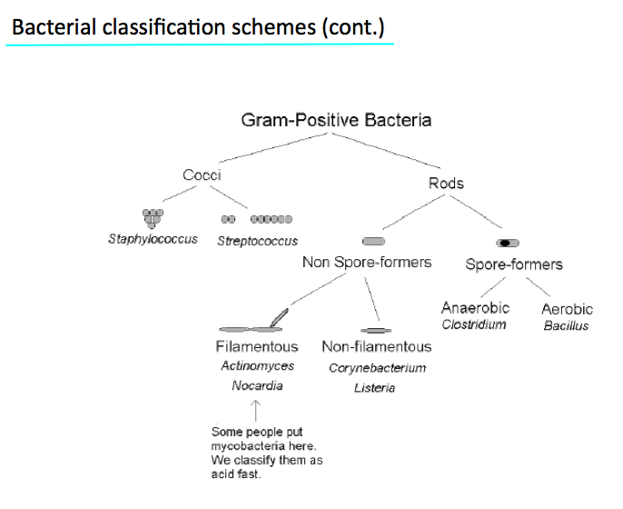 12 6 bacterial classification structure etc wozniak host gram cocci or rods ccuart Images