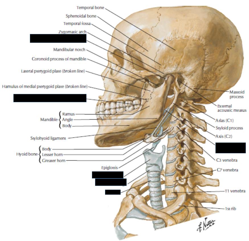 Osteology Of The Skull Gross Anatomy Flashcards Memorang