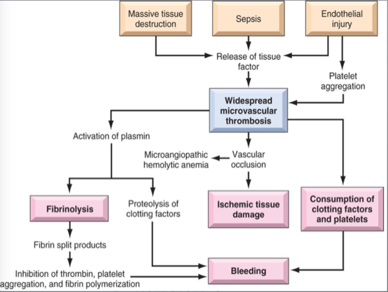 272 bleeding disorders pathology 1 flashcards memorang dic flow chart geenschuldenfo Choice Image