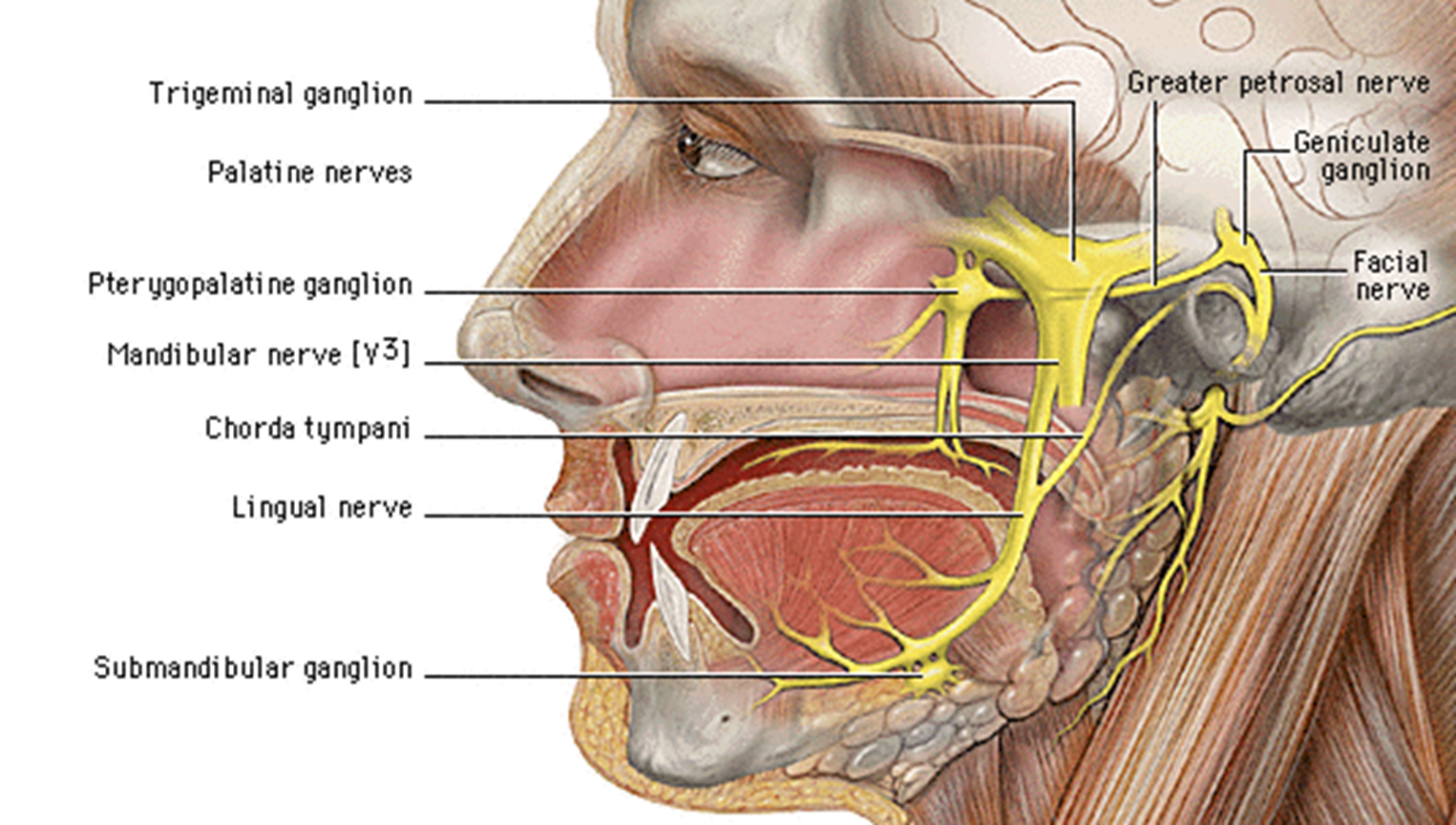 Floor Of Mouth Anatomy 48095 | MOVIEWEB